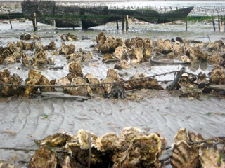 Oyster farm on Orcas Island