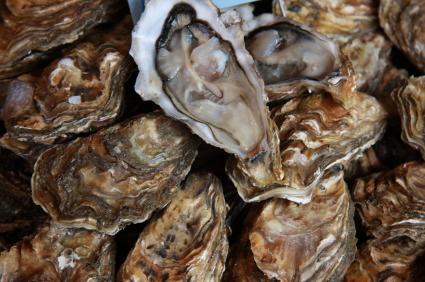Oysters Rock-ya-fella Image